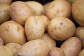 Gruppen av unga rå patatoes i peel närbild — Stockfoto