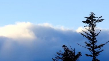 Clouds movement over pine trees, static video. Ukraine, Carpathian mountains, Dragobtat. — Stock Video