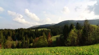 Sunshine daisies vibrant wild meadow — Stock Video