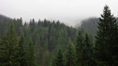 Tajemství lesa — Stock video