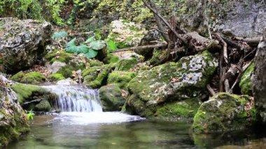 Małe wodospady w pokojowego drewna. — Wideo stockowe