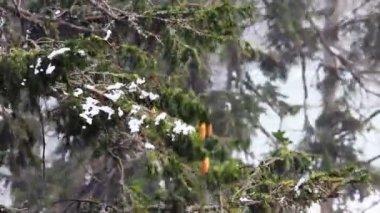 Snowstorm — Stock Video