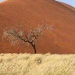 Sossusvlei sand dunes landscape in the Nanib desert near Sesriem — Stock Photo