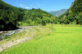 Green rice fields and mountain river landscape, trek to Annapurn — Stock Photo