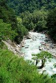 Beautiful himalayan forest landscape, trek to Annapurna Base Cam — Stock Photo