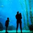 Silhouettes in aquarium background — Stock Photo #15693455