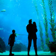 Silhouettes in aquarium background - Stock Photo