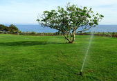Irrigation system watering lawn — Stock fotografie