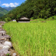 Rice fields and freshwate. Himalayan landscape — Stock Photo