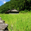 Rice fields and village. Himalayan landscape - Stock Photo
