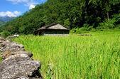 Rice fields and village. Himalayan landscape — Stock Photo