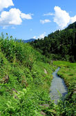 Rice fields and freshwate. Himalayan landscape — Stock Photo
