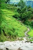 Schöne himalaya waldlandschaft, trek, annapurna base cam — Stockfoto