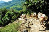 Beautiful himalayan forest landscape, trek to Annapurna Base Camp — Stock Photo