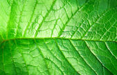 Green plant leave, detail — Stock Photo