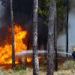 Stock Photo: Firemfighting forest fire