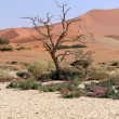 Sossusvlei sand dunes landscape in the Nanib desert near Sesriem — Stock Photo #20038589