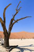 Sossusvlei dead valley landscape in the Nanib desert near Sesrie — Stock Photo