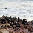 Stock Photo: Colony of seals at Cape Cross Reserve, Atlantic Ocean coast