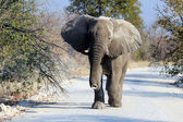 African elephant bull in Etosha Wildlife Reserve — Stock Photo