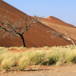 Sossusvlei sand dunes landscape in the Nanib desert near Sesriem — Stock Photo
