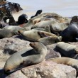 Colony of seals at Cape Cross Reserve, Atlantic Ocean coast — Stock Photo #21098975