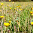 Ria Formosa Conservation Park, meadow flowers blowing whit the wind - Stock Photo