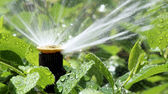 Automatic Garden Irrigation Spray system watering flowerbed — Stock Photo