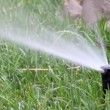 Garden irrigation spray system — Stock Video