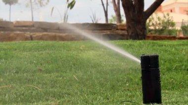 Trädgård bevattning sprinkler vattna gräsmattan — Stockvideo