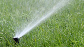 Garden Irrigation Sprinkler watering lawn — Stock Photo