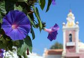 Ipomoea purpurea blomma och palatset i estoi kapell i bakgrunden — Stockfoto