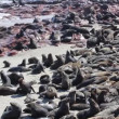 Stock Video: Colony of seals at Cape Cross Reserve, Atlantic Ocean coast in Namibia.