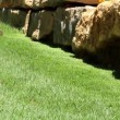Gardening Activity - Lawn string trimmer cutting border — Vídeo de stock