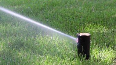 Garden Irrigation Sprinkler watering lawn — Video Stock