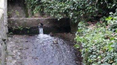 Monchique pure fresh mountain water stream. Algarve. Portugal — Stock Video