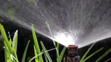Garden irrigation bubler — Stock Video