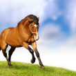 Beautiful Horses — Stock Photo