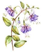 Watercolor with fuchsia — Stock Photo
