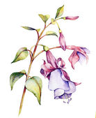 Watercolor with fuchsia — Stock Photo