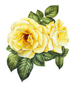 Watercolor with white roses — Stock Photo