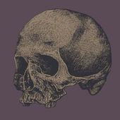 Skull. vector background — Stock Vector