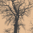 Big tree and branches silhouette. — Vector de stock