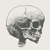 Skull, death's head. — Vector de stock