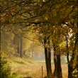 Stock Photo: Road through the autumn forest