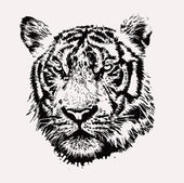 Tiger head. hand drawing. — Stock Vector