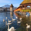 Lucerne, autumn morning — Stock Photo