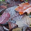 Texture tree leaf fall — Stock Photo