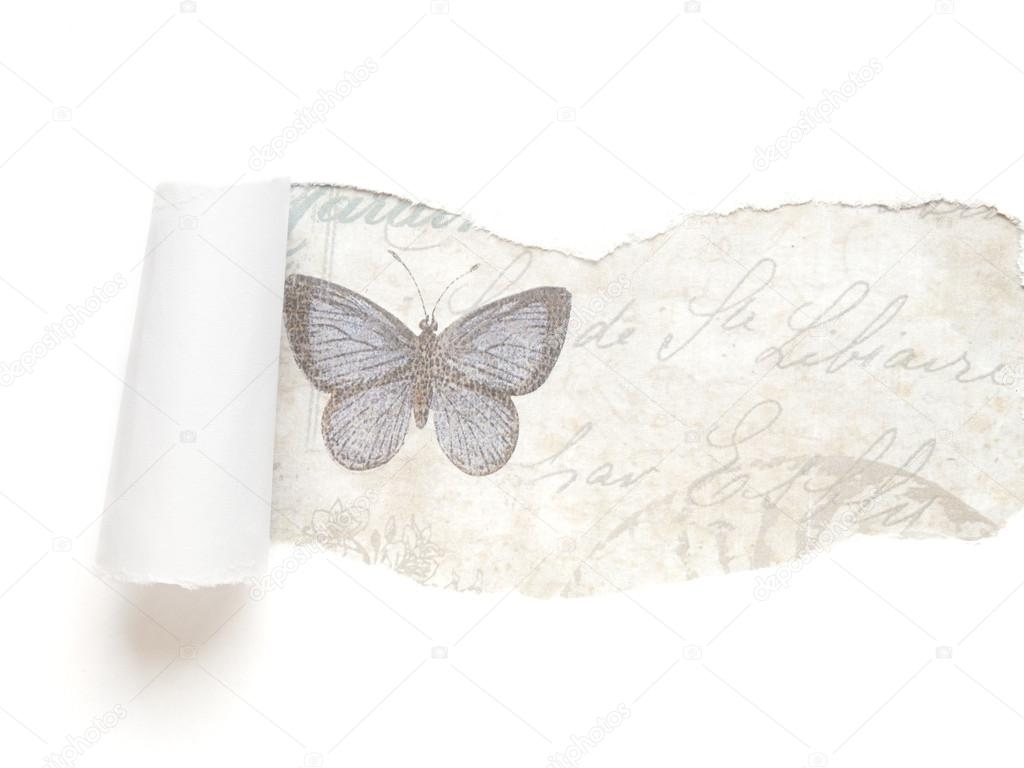 White torn paper background with butterfly stock photo for White paper butterflies