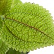 Plant with green leaves texture — Foto de Stock